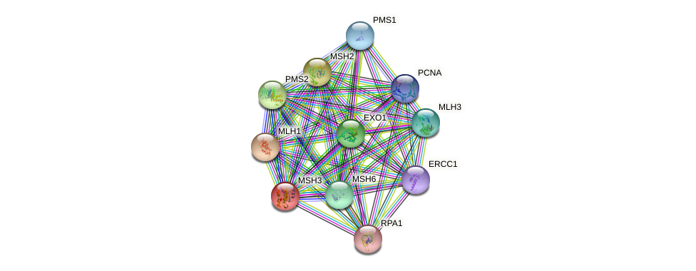 MSH3 protein (human) - STRING interaction network