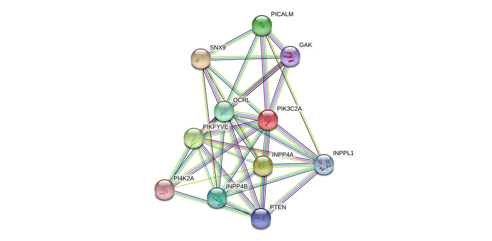 PIK3C2A protein (human) - STRING interaction network