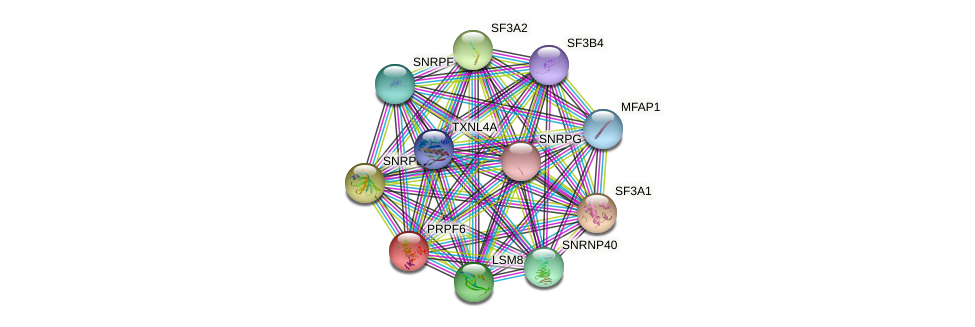 PRPF6 protein (human) - STRING interaction network
