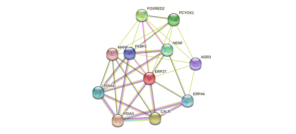 ERP27 protein (human) - STRING interaction network