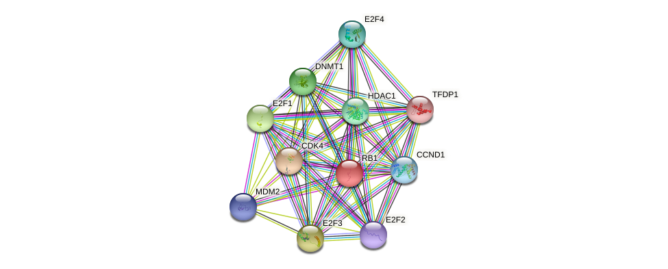 RB1 protein (human) - STRING interaction network