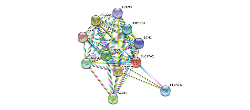 SLC27A2 protein (human) - STRING interaction network