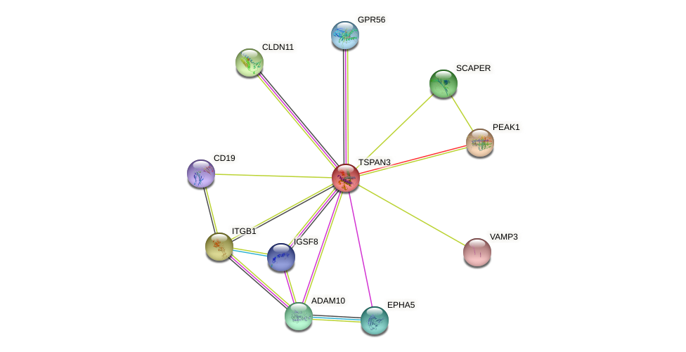 TSPAN3 protein (human) - STRING interaction network
