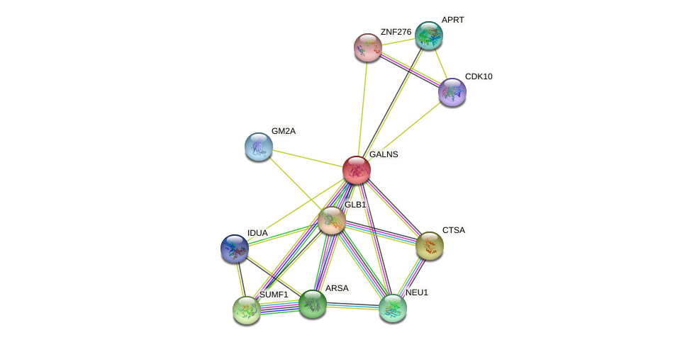 GALNS protein (human) - STRING interaction network