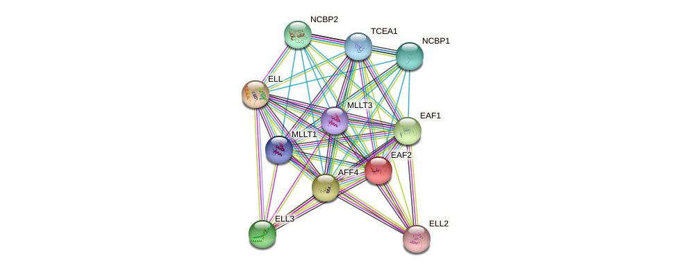 EAF2 protein (human) - STRING interaction network
