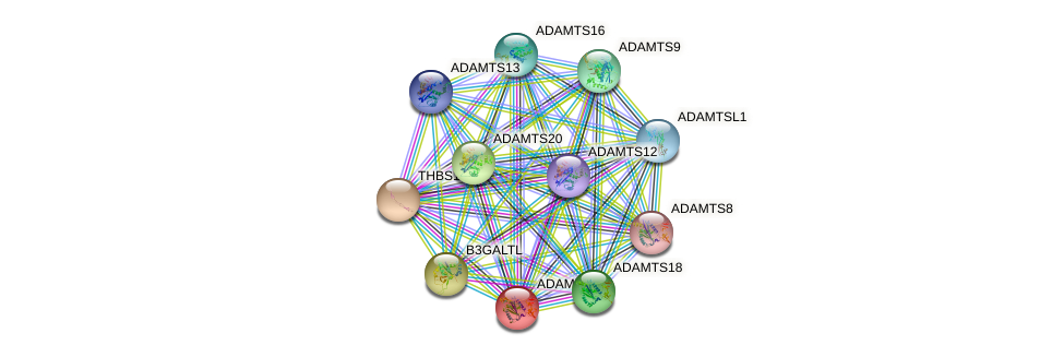ADAMTS19 protein (human) - STRING interaction network