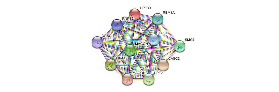 UPF3B protein (human) - STRING interaction network