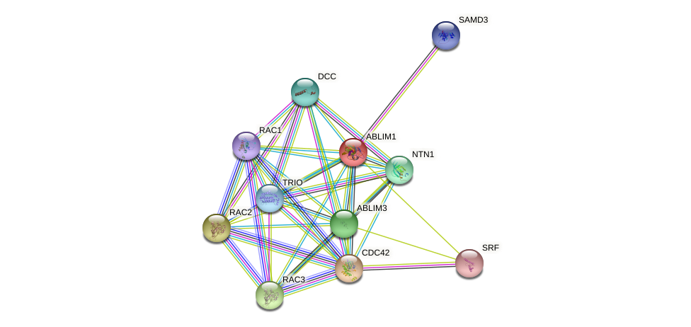 ABLIM1 protein (human) - STRING interaction network