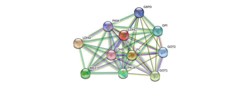 LDHC protein (human) - STRING interaction network