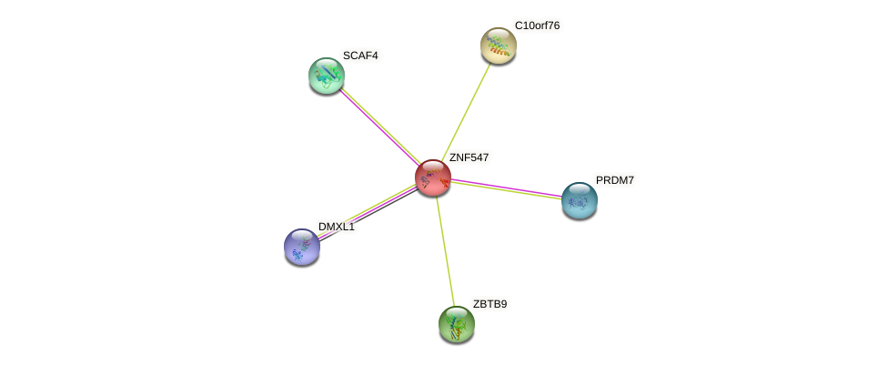 ZNF547 protein (human) - STRING interaction network