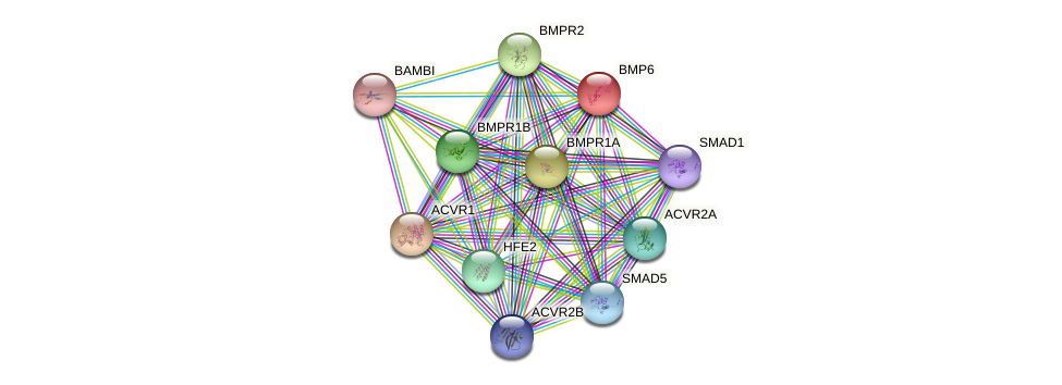 BMP6 protein (human) - STRING interaction network