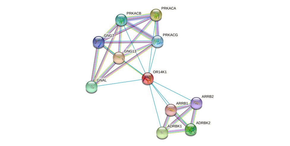 OR14K1 protein (human) - STRING interaction network