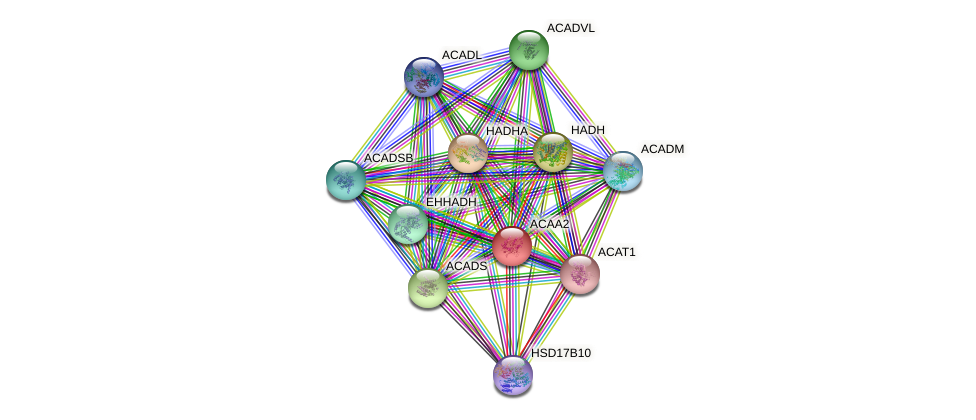ACAA2 protein (human) - STRING interaction network