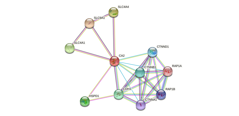 CA2 protein (human) - STRING interaction network
