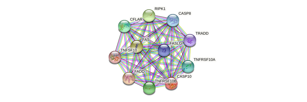 CASP10 protein (human) - STRING interaction network