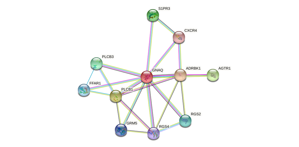 GNAQ protein (human) - STRING interaction network