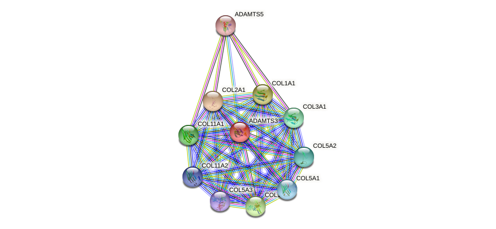 ADAMTS3 protein (human) - STRING interaction network
