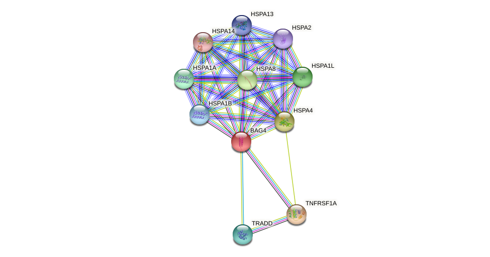 BAG4 protein (human) - STRING interaction network
