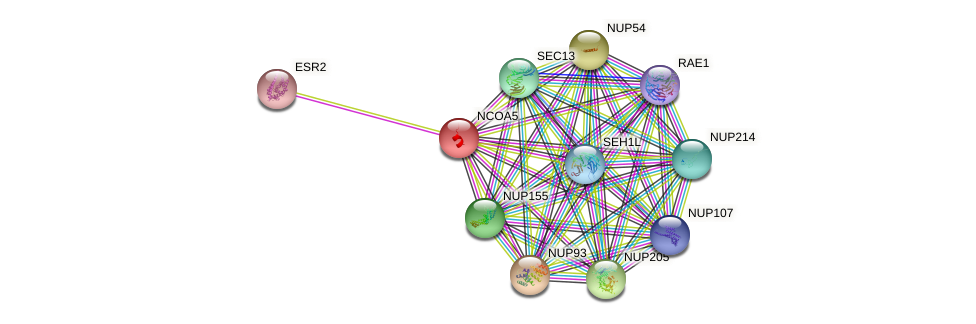 NCOA5 protein (human) - STRING interaction network