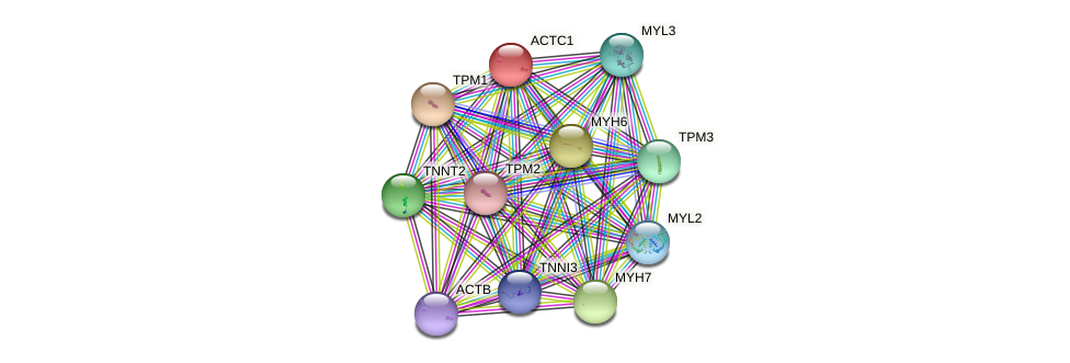 ACTC1 protein (human) - STRING interaction network