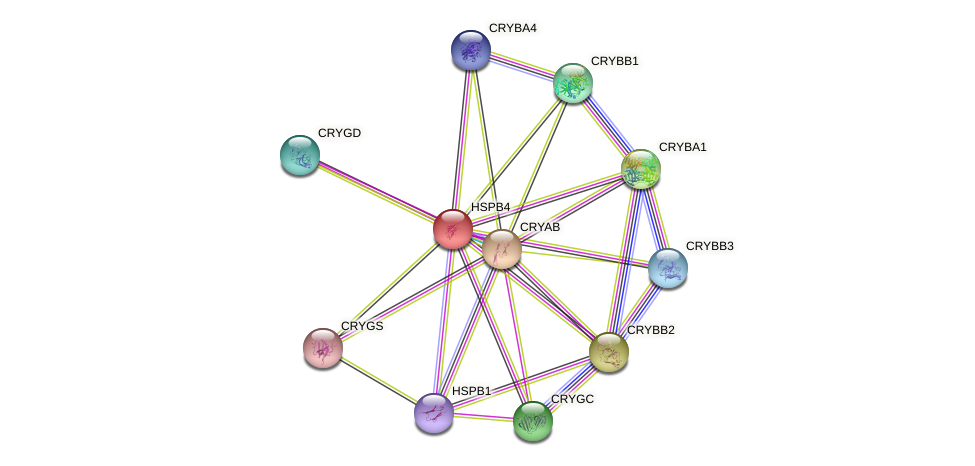 HSPB4 protein (human) - STRING interaction network