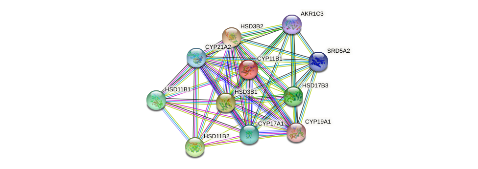CYP11B1 protein (human) - STRING interaction network