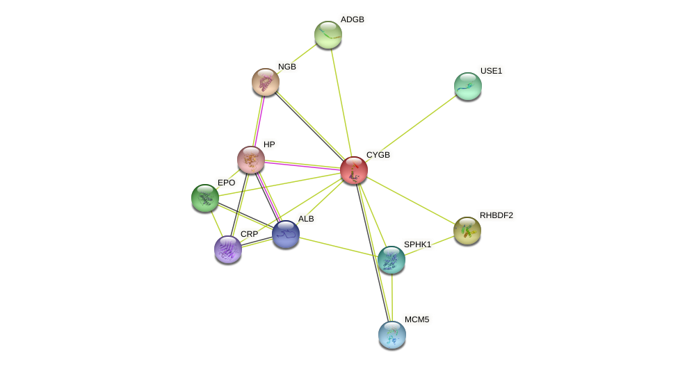 CYGB protein (human) - STRING interaction network