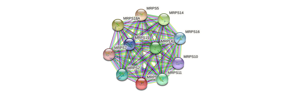 MRPS18C protein (human) - STRING interaction network