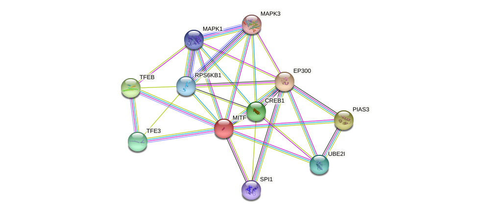 MITF protein (human) - STRING interaction network
