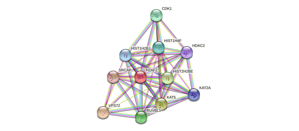 H2AFZ protein (human) - STRING interaction network
