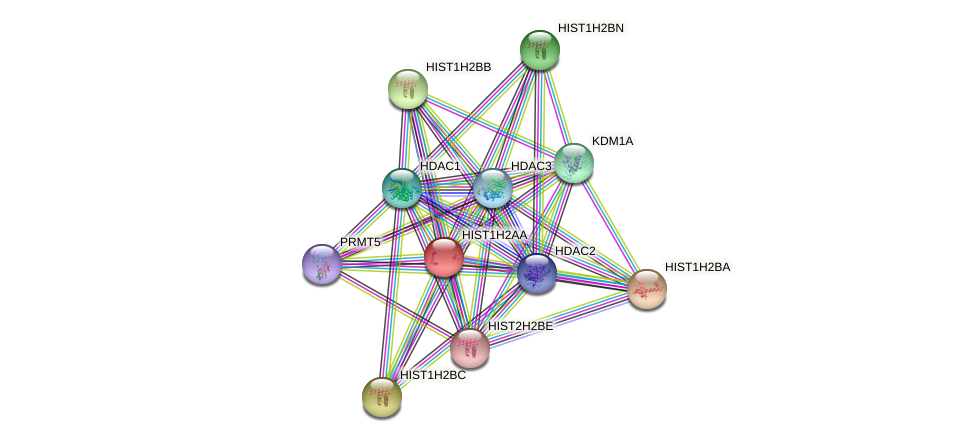 HIST1H2AA protein (human) - STRING interaction network