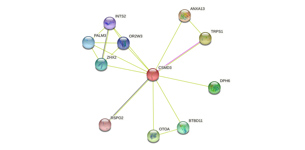 CSMD3 protein (human) - STRING interaction network