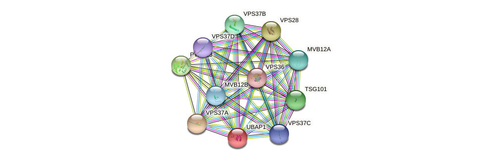 UBAP1 protein (human) - STRING interaction network