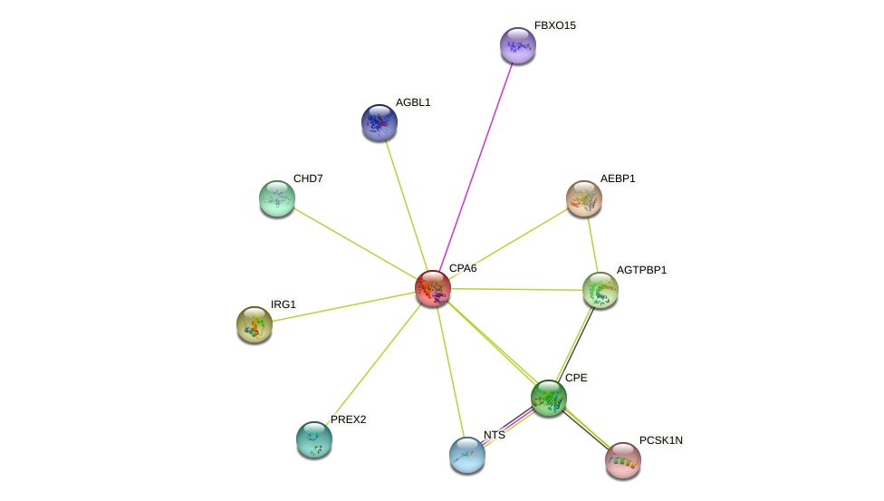 CPA6 protein (human) - STRING interaction network
