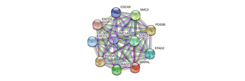 WAPAL protein (human) - STRING interaction network