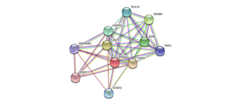 PDIA3 protein (human) - STRING interaction network