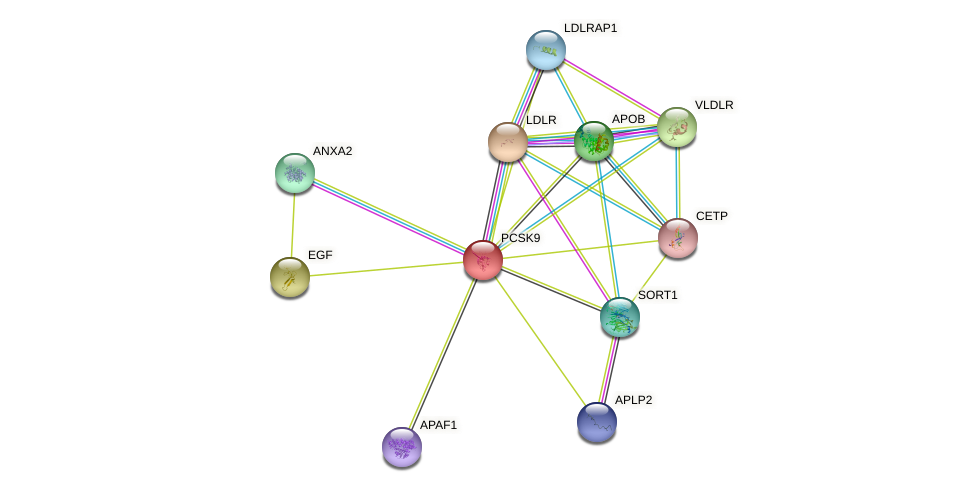 PCSK9 protein (human) - STRING interaction network