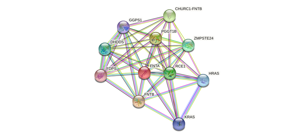 FNTA protein (human) - STRING interaction network
