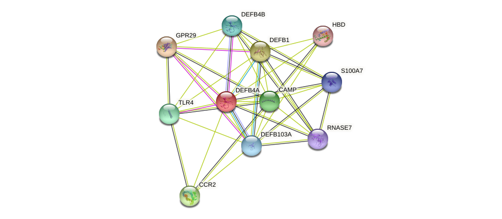 DEFB4A protein (human) - STRING interaction network
