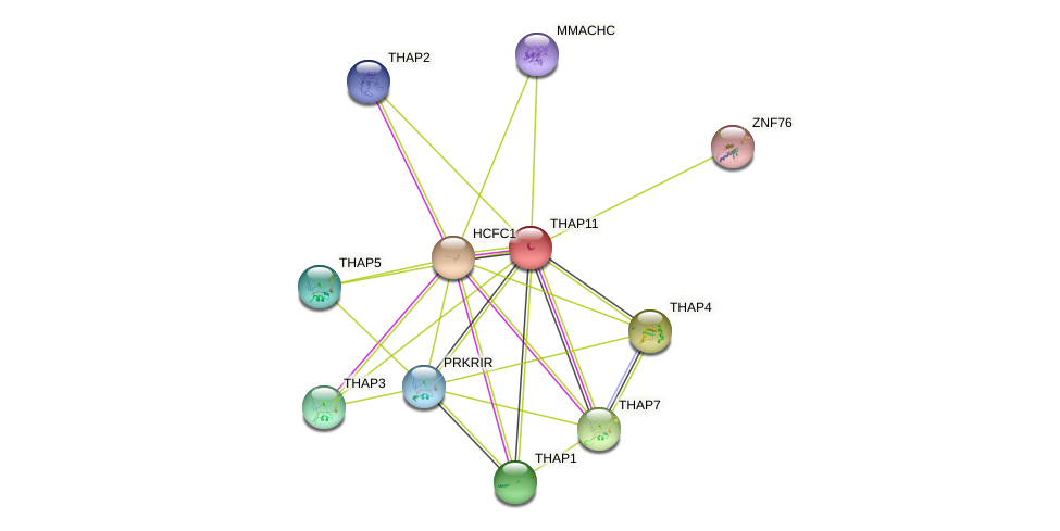THAP11 protein (human) - STRING interaction network