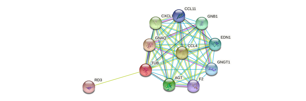 TUB protein (human) - STRING interaction network