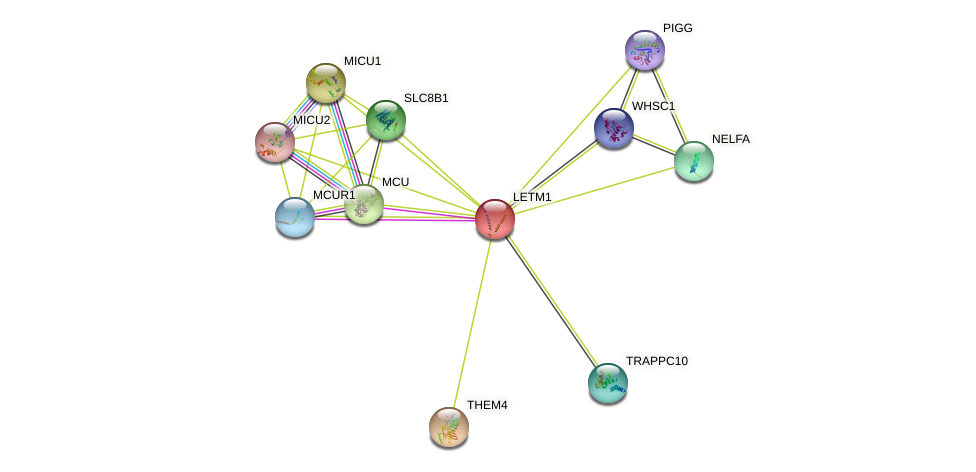 LETM1 protein (human) - STRING interaction network