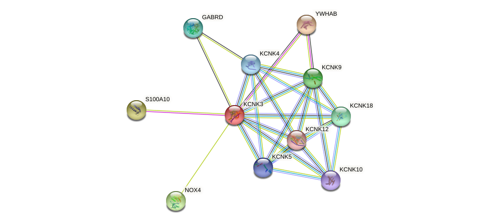 KCNK3 protein (human) - STRING interaction network
