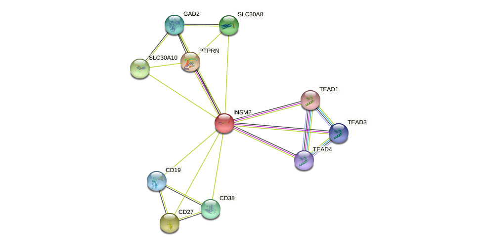 INSM2 protein (human) - STRING interaction network