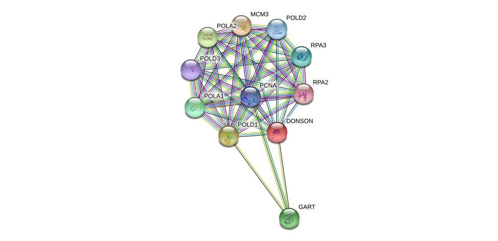 DONSON protein (human) - STRING interaction network
