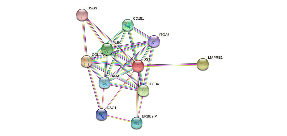 DST protein (human) - STRING interaction network