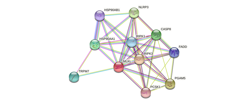 MLKL protein (human) - STRING interaction network