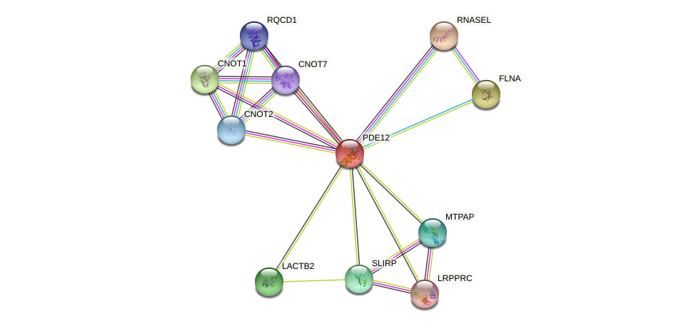 PDE12 protein (human) - STRING interaction network
