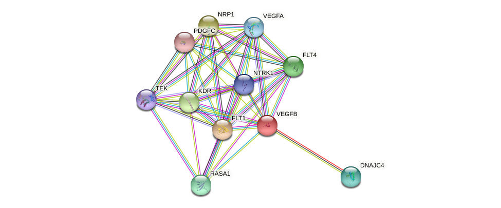 VEGFB protein (human) - STRING interaction network