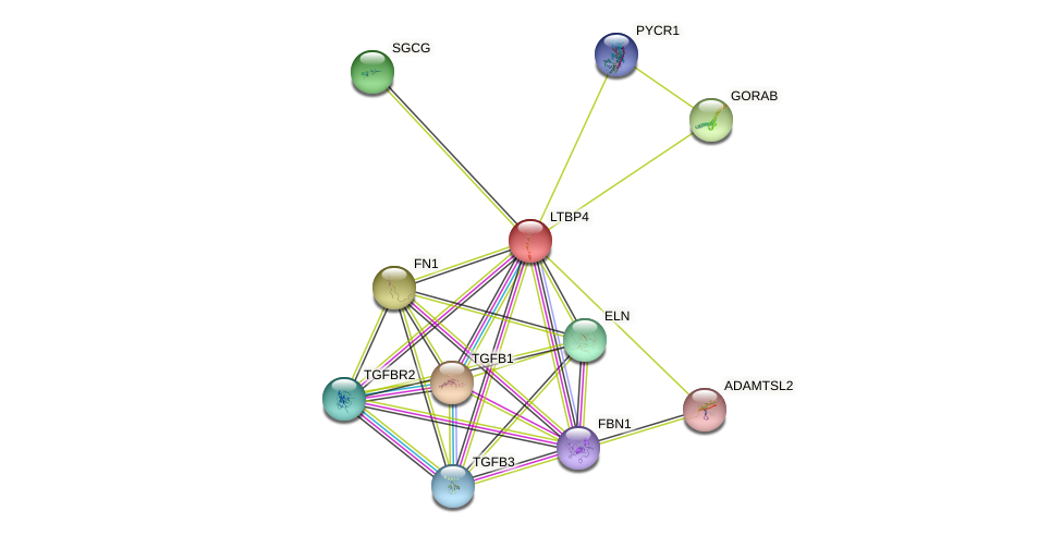 LTBP4 protein (human) - STRING interaction network